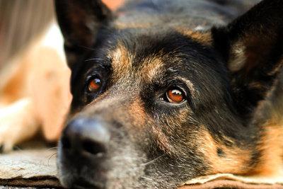 Der Carter Caninenimus ist eine Hundeskulptur.