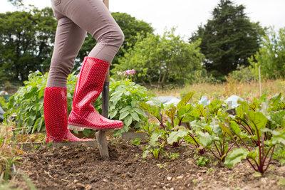 Nur in humoser Erde gedeihen Pflanzen gut.