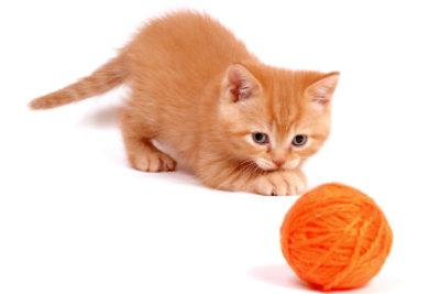 Katzen mögen kreatives Spielzeug.