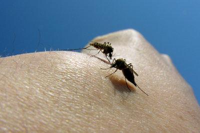Beugen Sie gegen Mückenstiche vor.