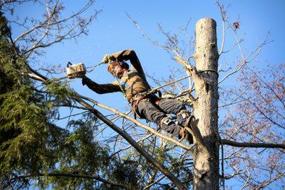 Eine Baumfällung gehört in die Hand des Profis.