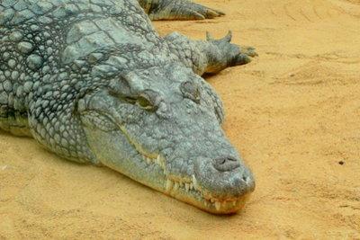 Verkleiden Sie sich mal als Krokodil.