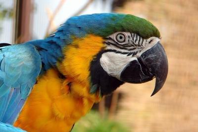 Papageienhaltung ist kostspielig.