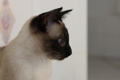Eine Katze ist ein vollwertiges Familienmitglied.