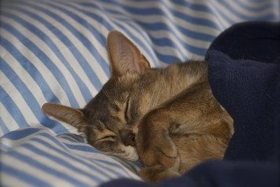 Mollig warm mit der richtigen Bettwäsche.