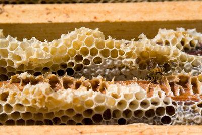 Bienenwachs ein Hauptbestandteil von Wachsbalsam