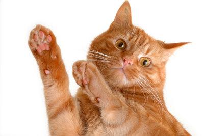 Manchmal benutzen Katzen Füße als Spielzeug.