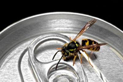 Wespenstiche können üble Schwellungen auslösen.