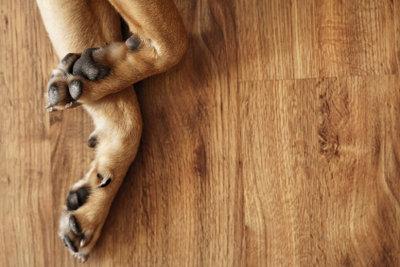 Krallenpflege beim Hund ist wichtig.