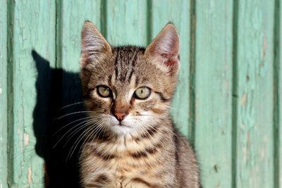 Katzenabwehrspray wirkt überall.