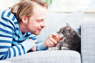 Katzen mögen sanfte Massagen.