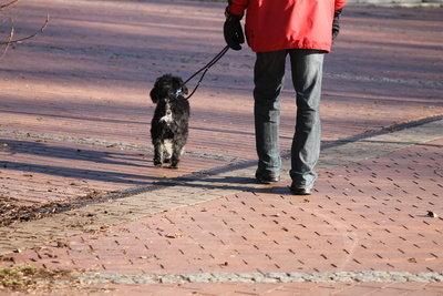 Eine Hundpatenschaft ist wertvoll.
