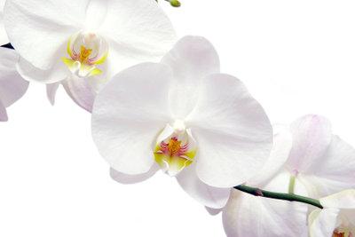 Orchideen kann man leicht andersfarbig gestalten.
