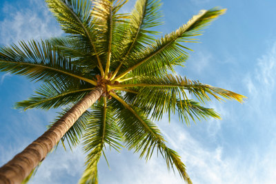 Genießen Sie Hawaii zu Hause
