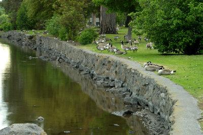Ein Teich kann unterschiedlich angelegt werden.