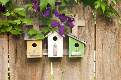 Bieten Sie Vögeln einen Nistplatz!