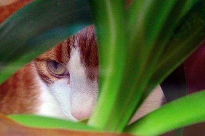Katzen lieben die Natur.