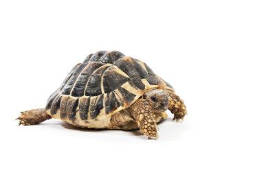 Schildkröten brauchen viel Platz.