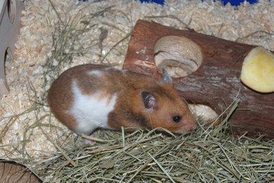 Ihren Hamster müssen Sie beschäftigen.