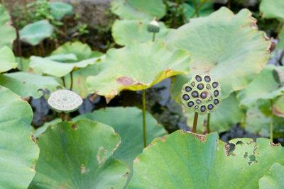 Für Miniteiche eignen sich diverse Pflanzen.