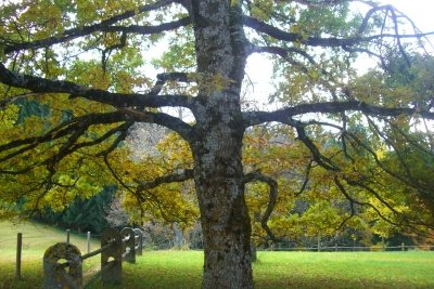 Ohne Baumfällgenehmigung geht vielerorts gar nichts.