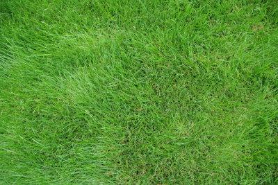 Wie oft muss man Rasen vertikutieren?