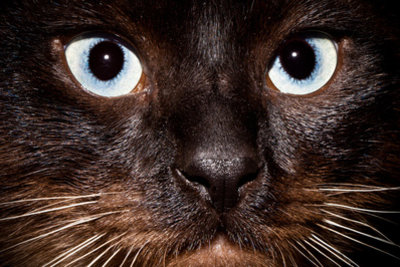 Die Augen einer Katze sehen alles.