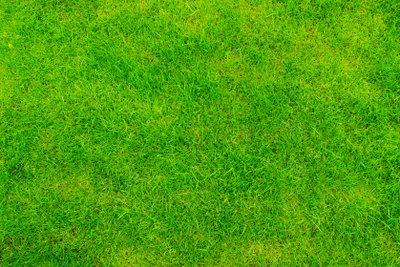 Ein gesunder Rasen erfordert viel Pflege.