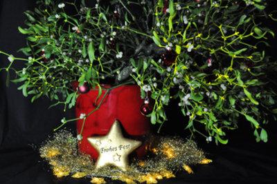 Mistelzweige sind ein traditionell weihnachtlicher Schmuck.