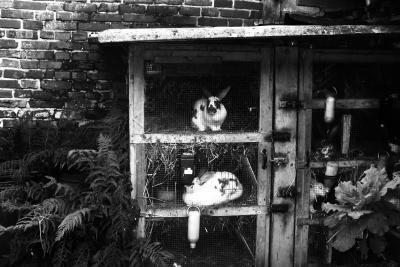 Im Freien fühlen Hasen sich wohl.