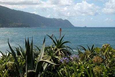 Auf zur Insel Madeira!