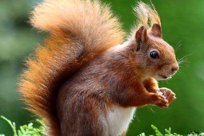 Eichhörnchen nach Anleitung aus Plüschstoff basteln