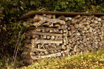 Dieses Holz dürfen Sie nicht sammeln.