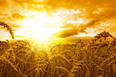 Weizenmehl kann zu Unverträglichkeitsreaktionen führen.