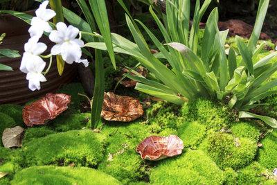 Moos verschönert nicht nur den Garten, sondern tut auch den Pflanzen gut