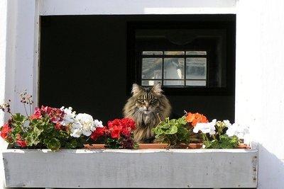 Verschönern Sie Ihren Balkonkasten.