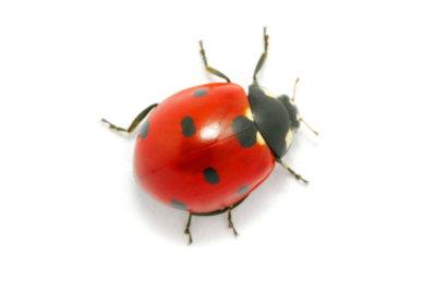 Aussehen wie ein Marienkäfer - so geht's.
