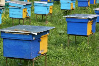 Auch im Bienenstock ist es warm.