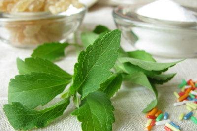Stevia - eine süße Pflanze.