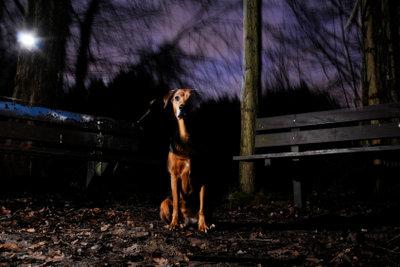 Nachts wacht der Hund.