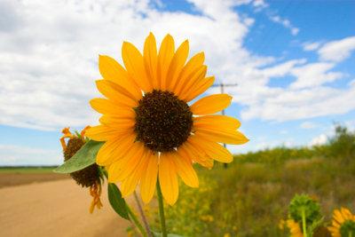 Der Sommer beglückt mit Blumen.