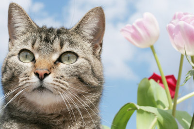 Katzen mögen sonnige Orte.