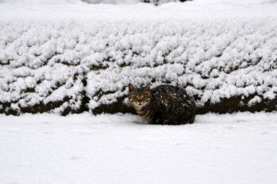 Katzen frieren schnell im Kalten.