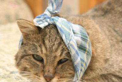 Katzen mit Katzenaids sind krankheitsanfällig.