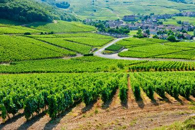 Landwirtschaft ist ein wichtiger Wirtschaftssektor.