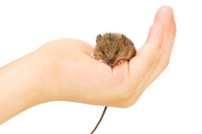 """""""Mann und Maus"""" gehören bei einer Alliteration zusammen."""