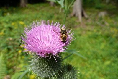 Wespenstiche sind besonders im Sommer ein Problem.