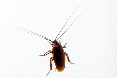 Bugs werden durch einen Patch behoben.
