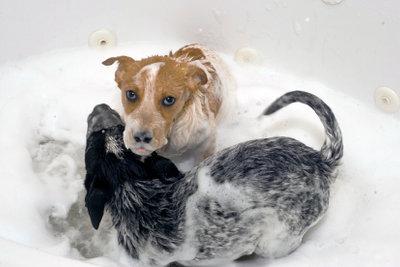 Hundeshampoo für die Fellpflege.