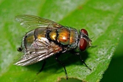 Fliegen stören die Gartenidylle.